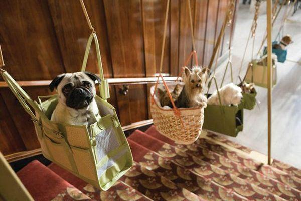 Кредиты на бизнес: удобства для собак в кредит