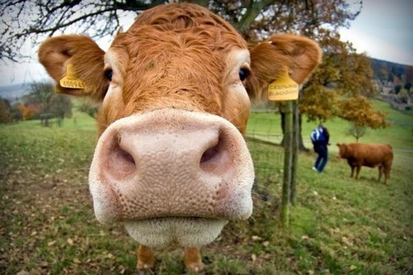 Сельскохозяйственный кредит для бизнеса
