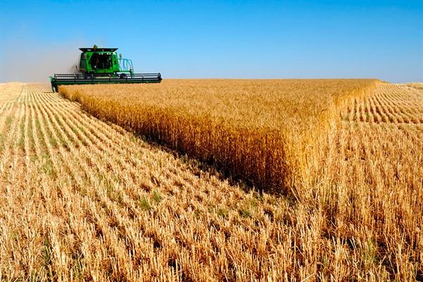 Кредиты от Россельхозбанка на агробизнес: лучшие предложения