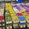 Специалисты и таможенники опровергли информацию о возможном дефиците цветов